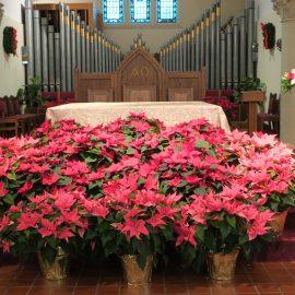 Christmas Music and Christmas Flowers